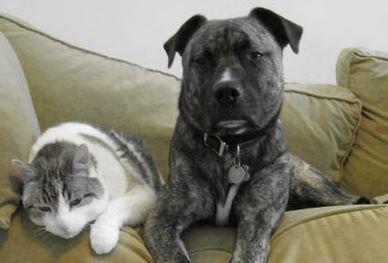 Catdog47