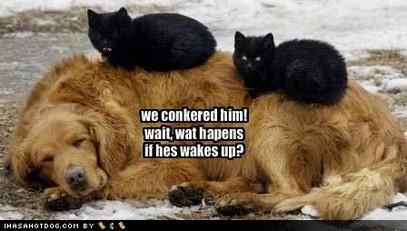 Catsdogs1