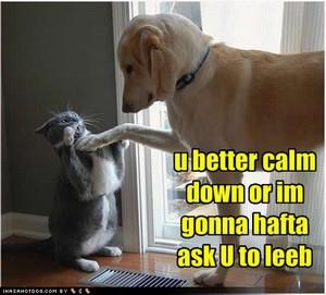 Catsdogs47